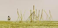 Burning Man trees art installation