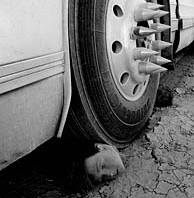 Human head under bus wheel