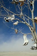 Tree art installations with hanging shoes in Black Rock Desert