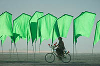 Girl on the bicycle riding along the field of green flags