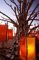 Message tree with orange lamps