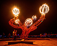 People are fascinated by spinning fruits of the art tree