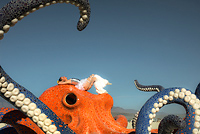 Octopus mosaic art installation