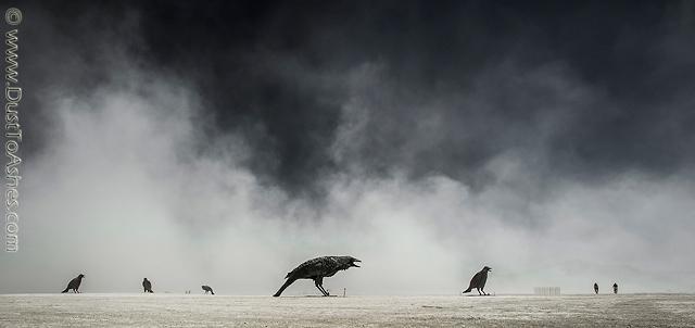 Killer birds
