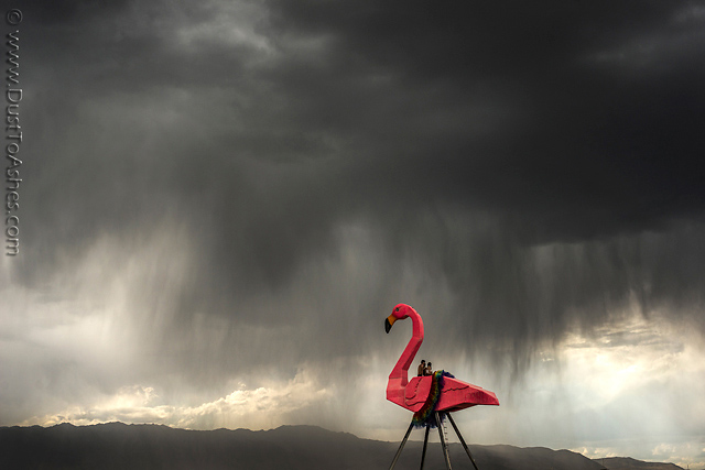 Model of Giant Flamingo