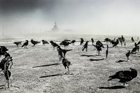 Murder INC by Murder Inc black birds